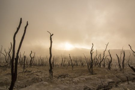 Kavanagh Quote, burnt trees on dried out dark landscape